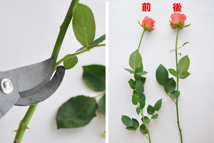 不要な葉っぱとトゲを取り除く