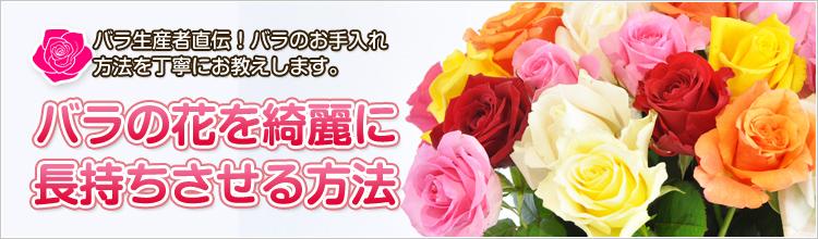 バラの花を長持ちさせる方法(お手入れ方法)