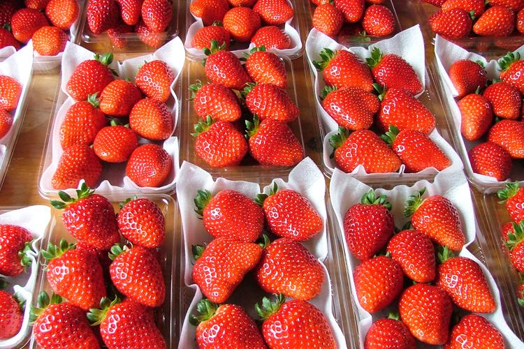 イチゴの栄養 ビタミンC